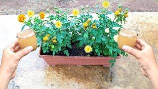 Aprenda a Fazer Este Maravilhoso Adubo Que Faz Qualquer Tipo de Planta Florir