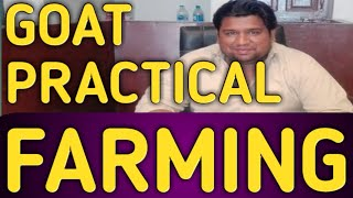 Goat Farming ( practical )
