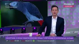 Попугай Жако Аполлон