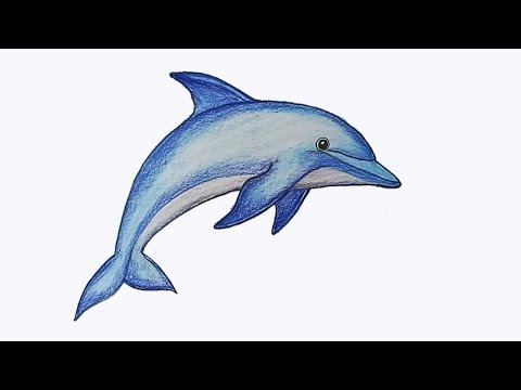 Easy pictures of dolphins to draw