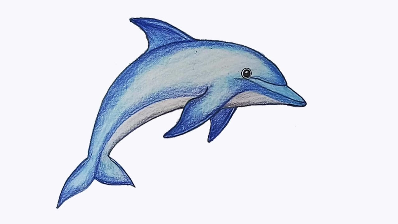 how to draw dolphin step by step youtube