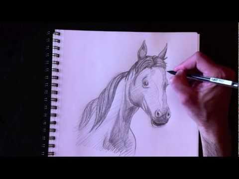 Dessiner un buste de cheval avec paolo morrone youtube - Dessiner cheval ...