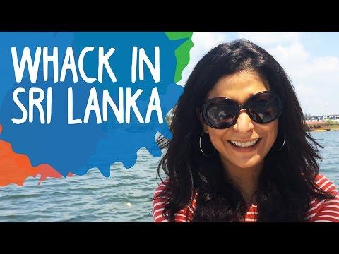 Whack in Sri Lanka | Dolphin whistles & President Banana