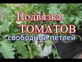 """Как подвязать помидоры. Способ """"Свободная петля"""". (06.06.16)"""