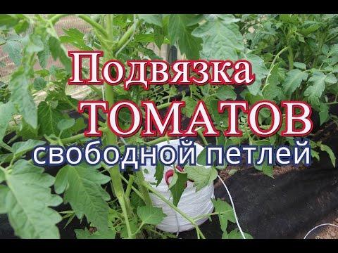 Как подвязать помидоры в теплице из поликарбоната видео