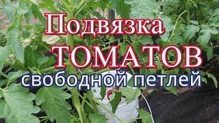 Как подвязать помидоры. Способ