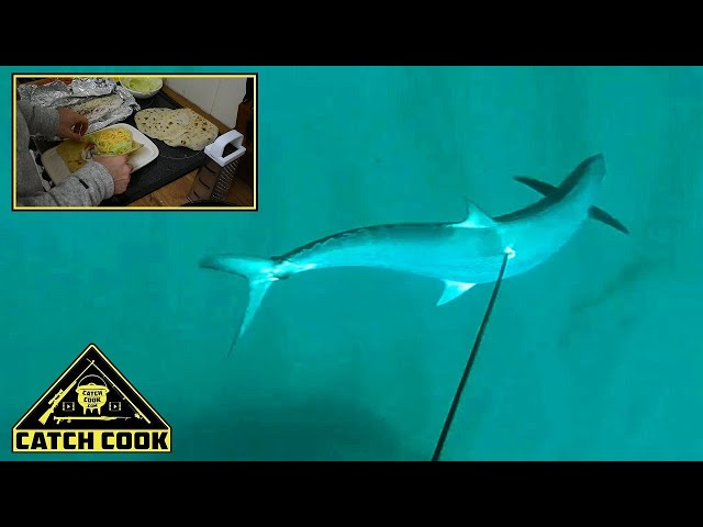 Spearfishing Barracouta [Catch Clean Cook] The Bluff Durban