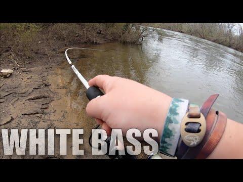 The White Bass Run Has Begun