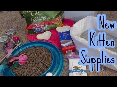 Supplies Your New Kitten or Cat needs