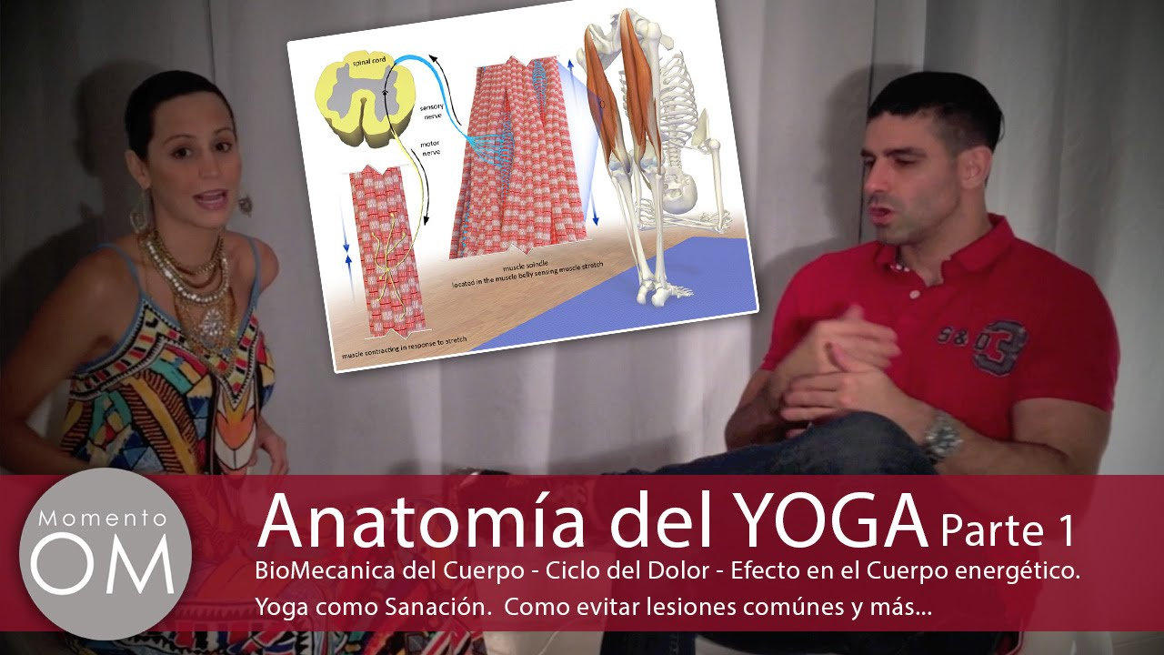 Momento Om. Anatomia del Yoga. Parte 1 - YouTube