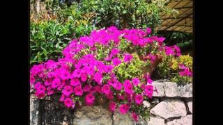 Beautiful 🌼 #flower #marguerite