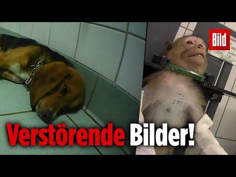 Undercover In Deutschlands Geheimsten Tierversuchslabor