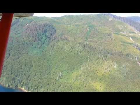 Forests on North Vancouver Island becoming infected by the Budworm and Turning Trees Brown