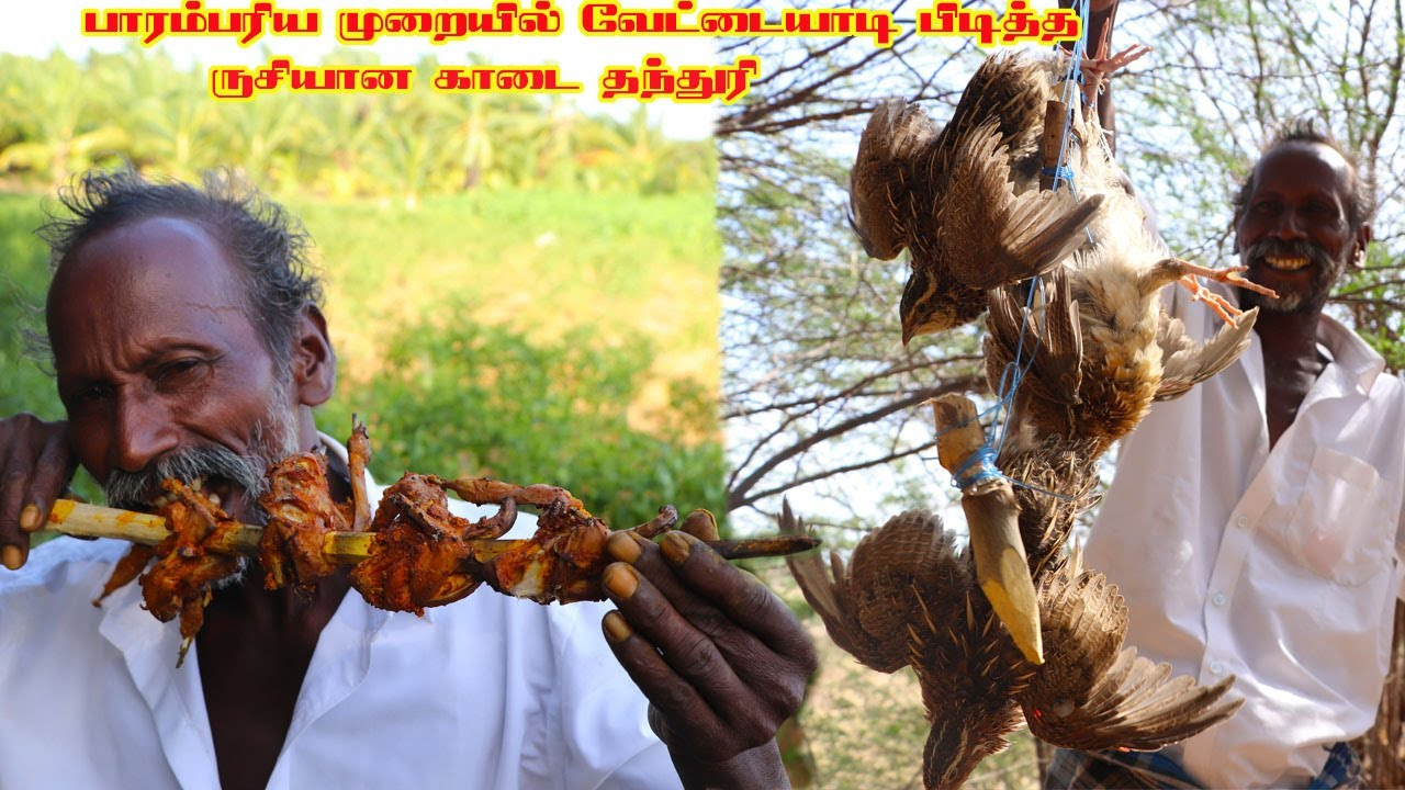 HUNTING AND COOKING QUAIL TANDOORI | QUAIL GRILL | Quail Hunting our Village Traditional Style