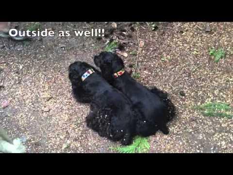 Yaletown Dog Training
