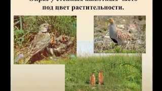 Природные зоны России. В степи.