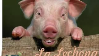 ¿Qué le dice un cerdo a otro cerdo?