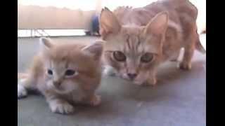 мама кошка спасает котенка