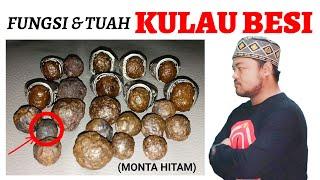 Fungsi & Tuah KULAU BESI (Monta Hitam)