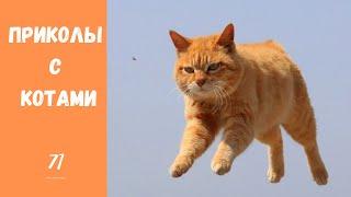 Смешные КОТЫ КОТИКИ КОТЯТА Приколы с животными 71