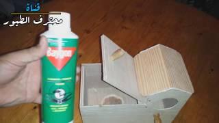 احمي عش البادجي من الفاش -   Method of killing lice of nest budgie