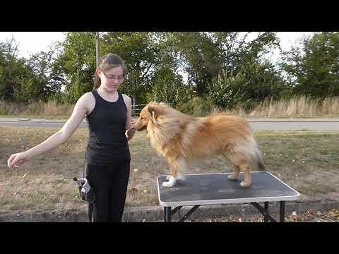 Ringtraining: So wird Ihr Hund bereit für die Ausstellung!