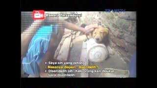 Download Video Miris!! Bakpau dari daging Anjing Anjing di Bantai dengan Kejam,  Reportase Investigasi Trans Tv MP3 3GP MP4
