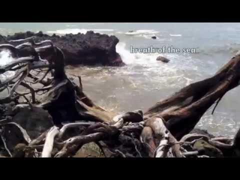 HaikuLife 2015: The Breath of the Sea