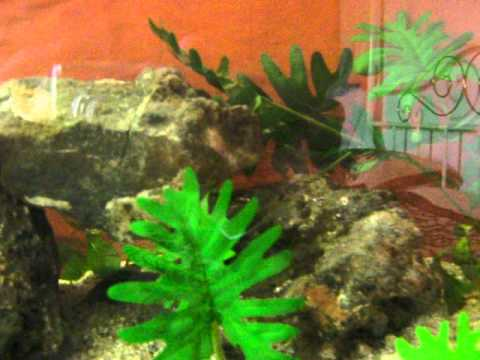 DIY aquarium ALMOST ZERO COST MADE FROM MARINE WOOD