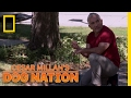 Overcoming Walking Anxiety   Cesar Millan's Dog Nation