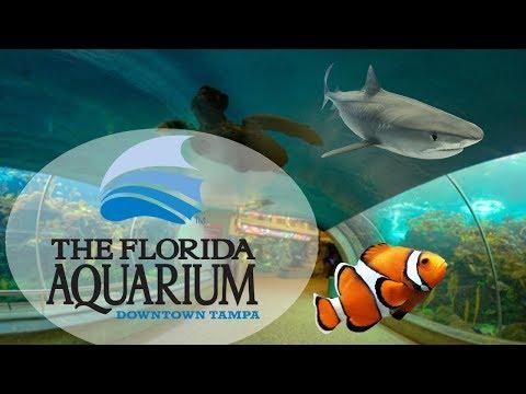 Sarykarmen Rivera  - Anuncian expansión del Florida Aquarium de Tampa