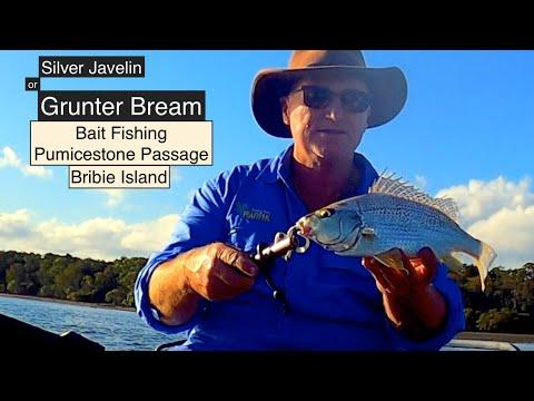 Bait Fishing Pumicestone Passage, GRUNTER BREAM, Bribie Island