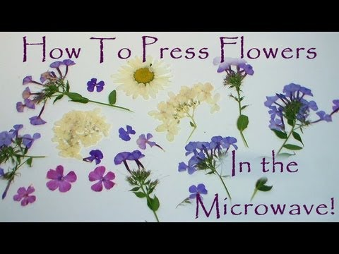 How to press flowers in a microwave youtube mightylinksfo