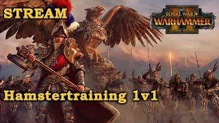 Hamstertraining 1v1 -  STREAM - Total War: Warhammer 2 Deutsch
