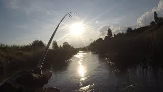 ГОЛАВЛЬ на ВОБЛЕРЫ СПИННИНГ на МАЛОЙ РЕКЕ Рыбалка летом на голавля воблеры для мелководья