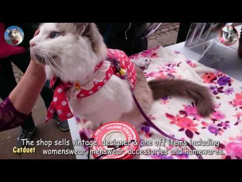Oliver The Ragdoll Cat as Volunteer for Demelza Hospice Care at 2016 Dickens Festival, Rochester