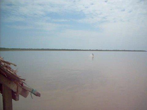 Delfin en Iquitos