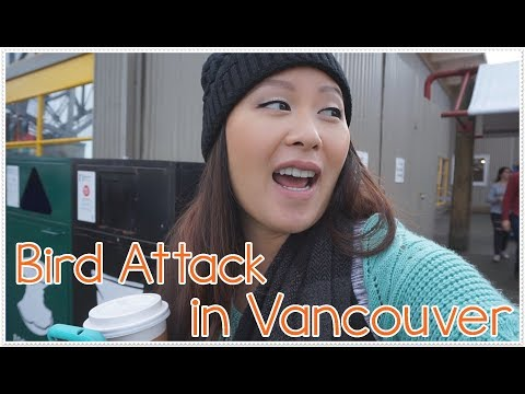 [Vlog 217 | A.A.] Bird Attack in Vancouver