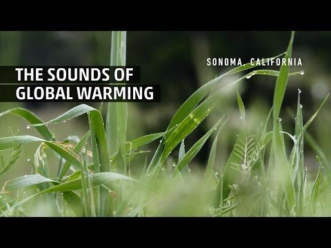That's Amazing: Sound Extinction
