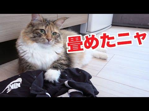 洗濯物を手伝ってくれる猫