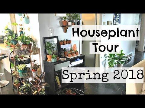 Houseplant Tour | Spring 2018 Houseplants