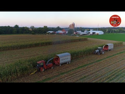 Chopping Corn Silage near Decatur Indiana - September 2018