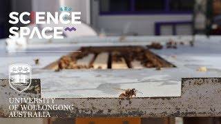 MILLIONS OF BEES! | Science Space Behind the Scenes