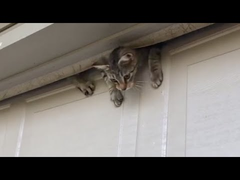 CAT DEFIES PHYSICS ESCAPES THROUGH GARAGE DOOR! CATS DON'T ABIDE BY THE LAWS OF NATURE.