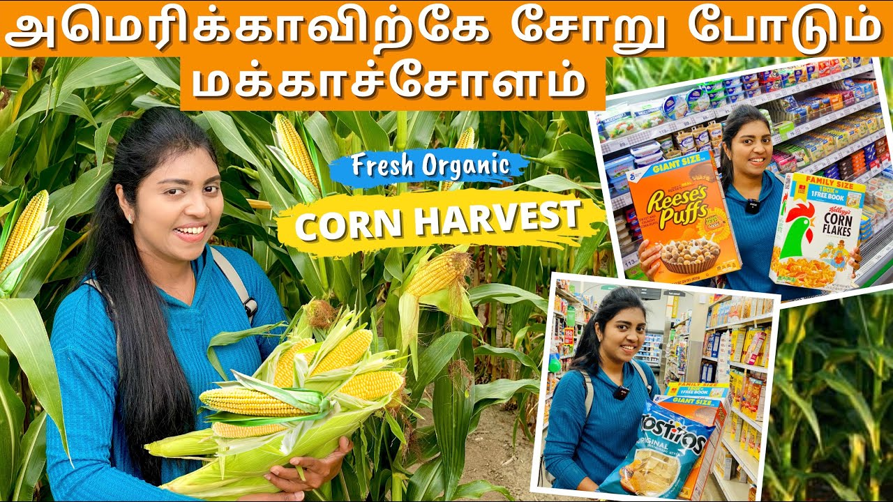Corn இல்லனா அமெரிக்கா இல்ல | Corn Feeds America | Farm to Supermarket | Seattle | USA Tamil VLOG