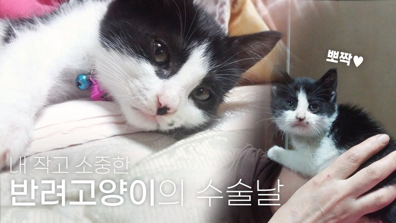 내 작고 소중한 고양이의 수술│고양이 세포종│ #반려동물 #고양이수술 #반려묘