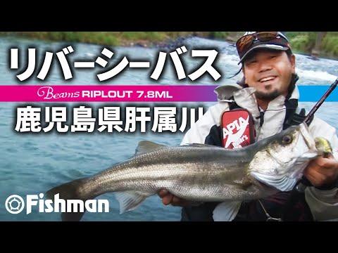 Fishman seabass division1 秋のリバーシーバスフィッシング鹿児島県肝属川