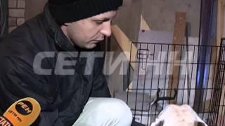Питомник с элитными щенками подожгли неизвестные в Нижнем Новгороде