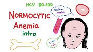 Normocytic Anemia Intro