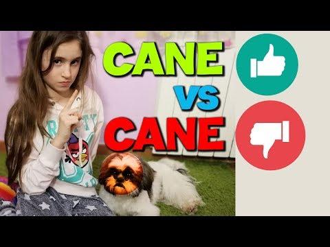 CANE UBBIDIENTE vs CANE DISUBBIDIENTE -by Charlotte M.